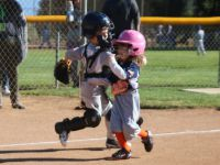 T-Ball Division